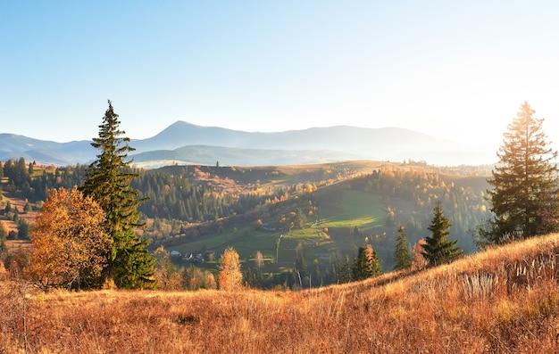 가을 시즌 동안 화창한 오후에 자작 나무 숲. 무료 사진