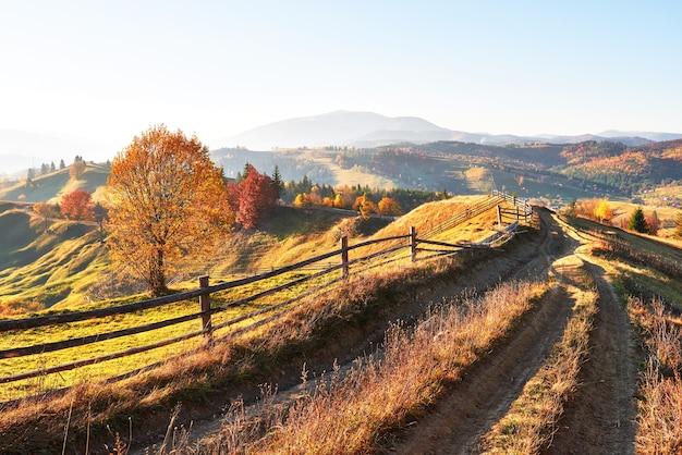 秋の晴れた日の晴れた日の白樺の森。 無料写真
