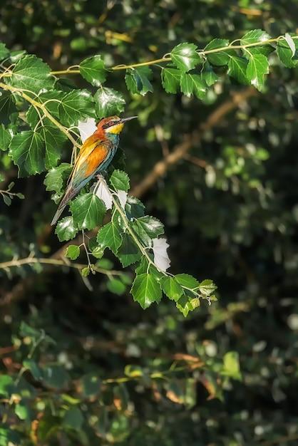 木の枝に止まった鳥蜂 Premium写真