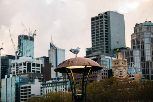 Bird in the city Free Photo