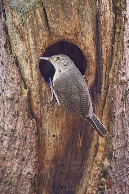 마른 나무에 둥지에 들어가는 새 프리미엄 사진