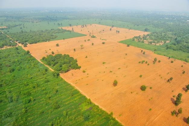Bird eye view of rice field in thailand Premium Photo