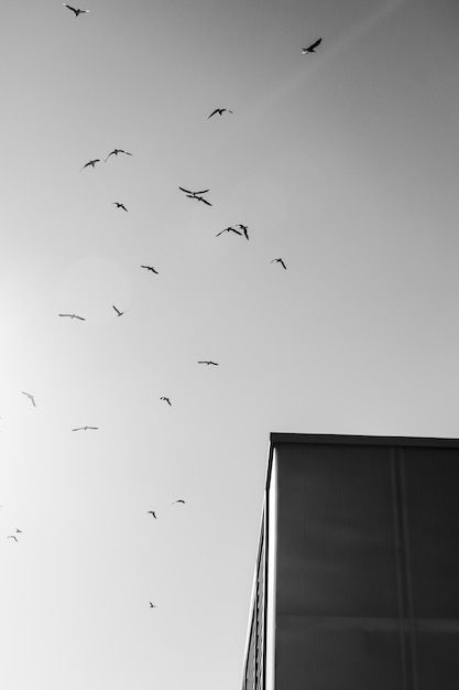 Bird flock flying Free Photo