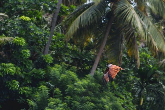 Птица летит с деревьями в фоновом режиме Бесплатные Фотографии