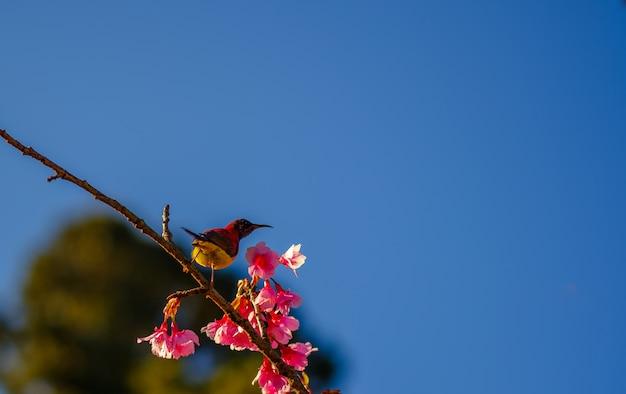 鳥、花、ピンク、花、咲く Premium写真