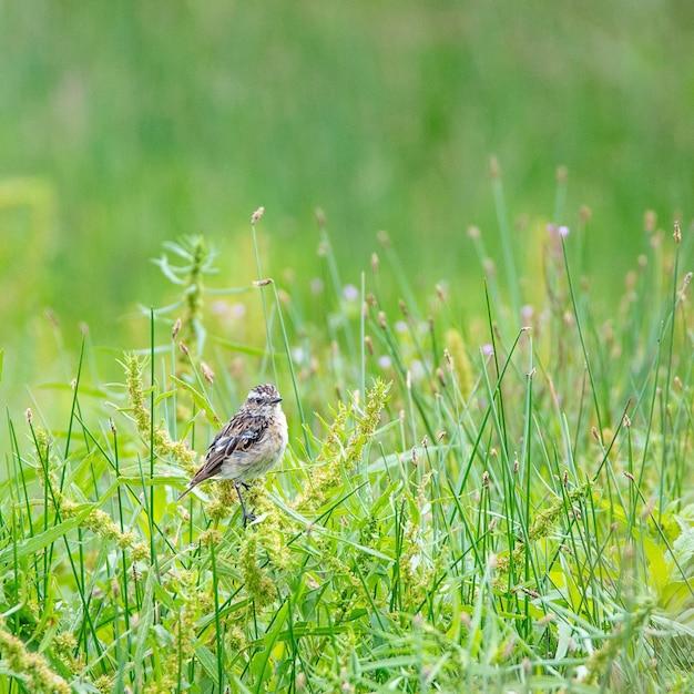 화창한 날에 잔디 필드에 새 무료 사진