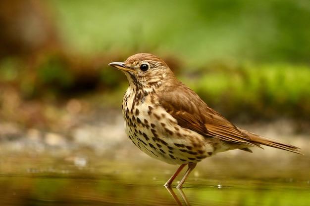 Птица в воде Бесплатные Фотографии