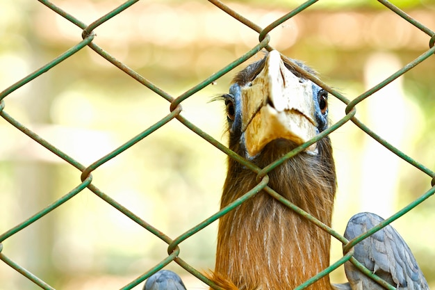 Bird is caught and imprisoned in a cage Premium Photo