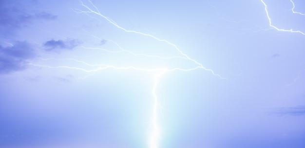 Bird of a lightning Free Photo