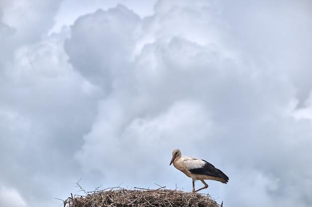 Bird on the nest Free Photo