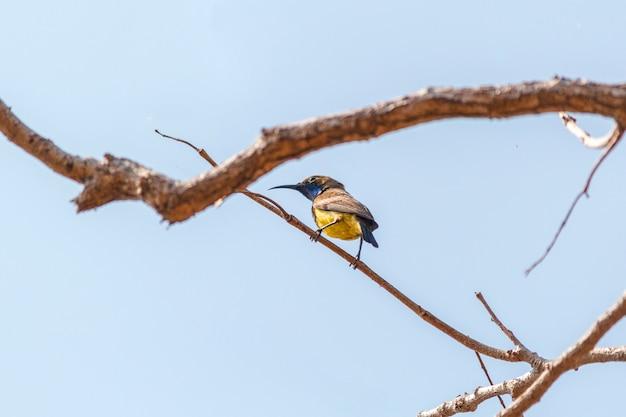 木の鳥 Premium写真