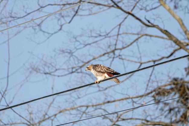 屋外の鳥 無料写真