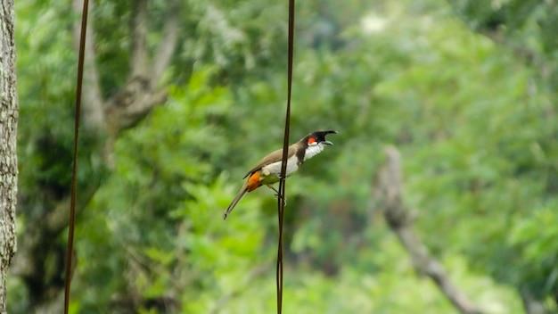 Bird_photography自然のキツツキ野生動物の鳥 無料写真