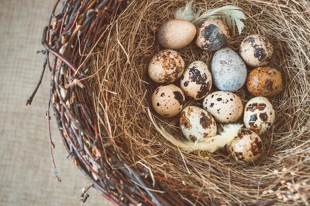 Bird's nest with eggs Premium Photo