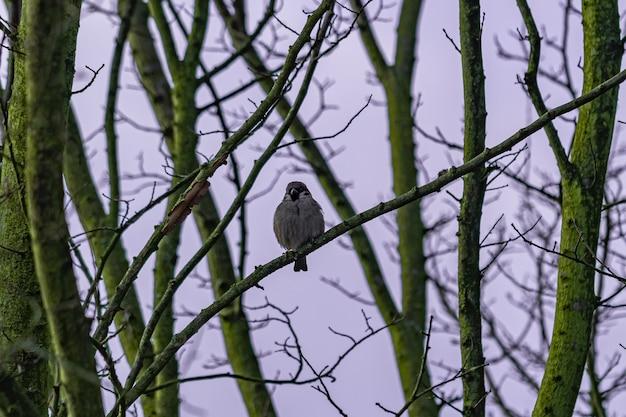 夜明けに木の枝に座っている鳥 無料写真