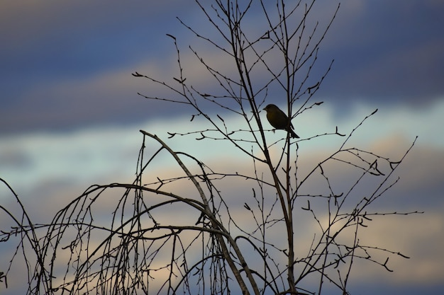 Bird on the tree. animal in nature. natural colorful background. Free Photo
