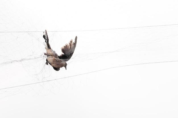 새는 흰색 메쉬에 정원사에 의해 잡혔다, 불법 새 함정 프리미엄 사진