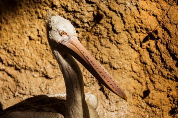 Bird Free Photo
