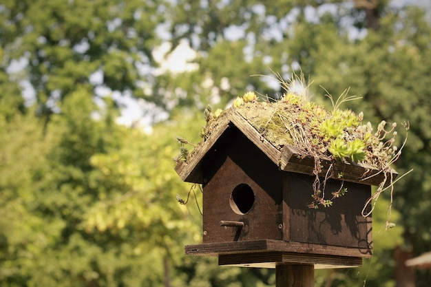 Birdhouse Free Photo