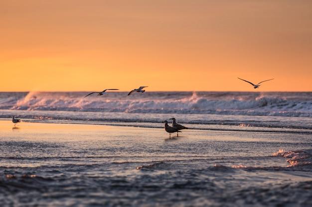 早朝の海辺の鳥 Premium写真