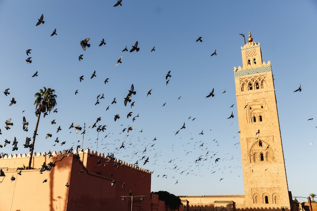 Birds fly around the market square in an african city marrakesh Premium Photo