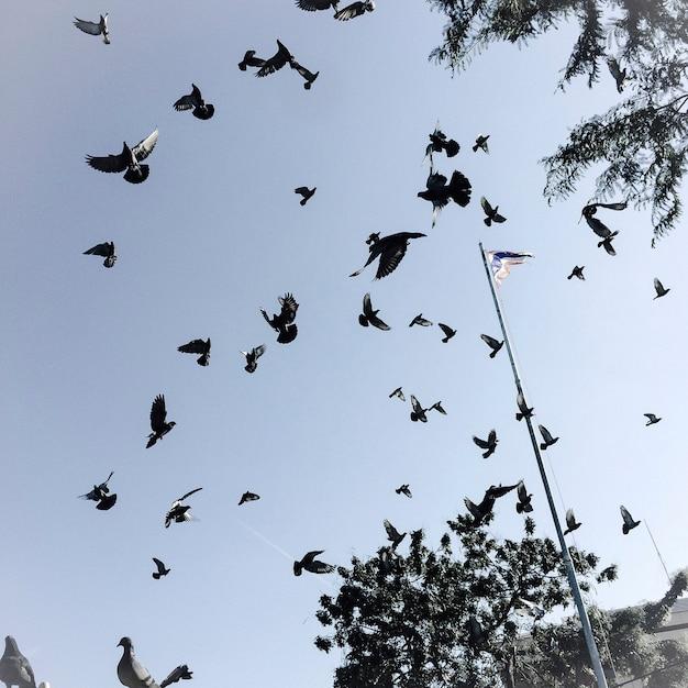 Птицы в небе Бесплатные Фотографии
