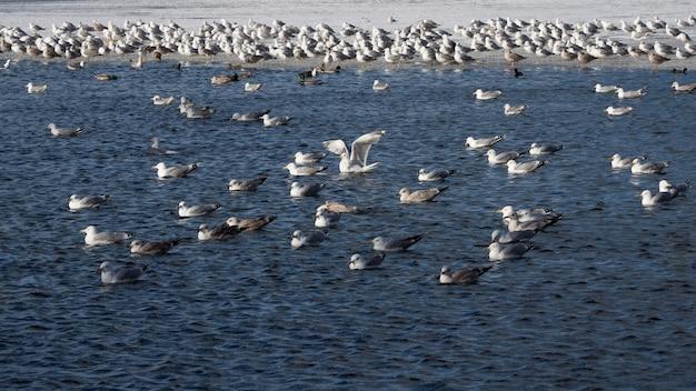 春の鳥。冬の青い水の中のcorの人口。 Premium写真