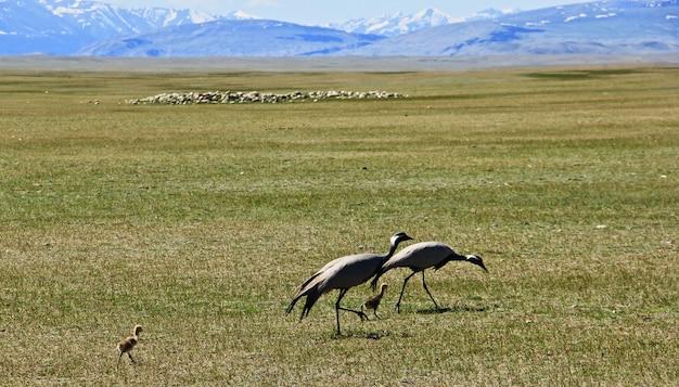 Птицы в огромной зеленой долине с горами Бесплатные Фотографии