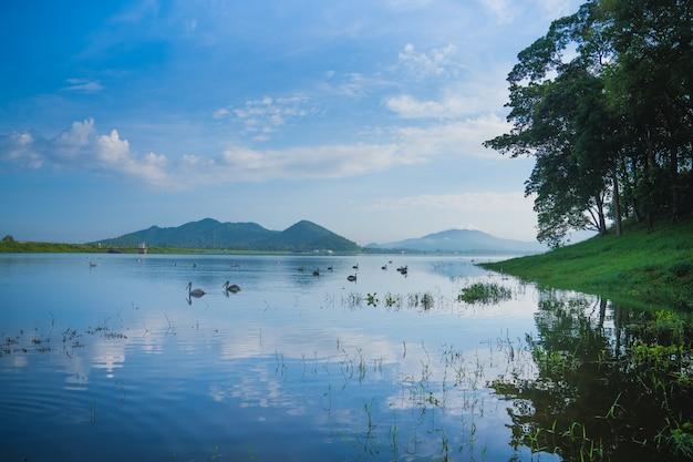 Birds on lake and mountain Premium Photo