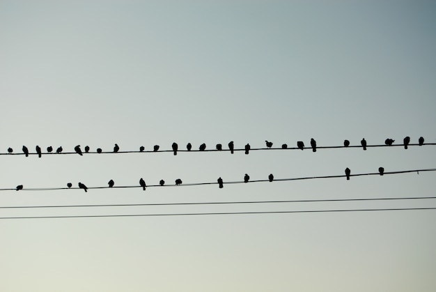Birds like musical notes Free Photo