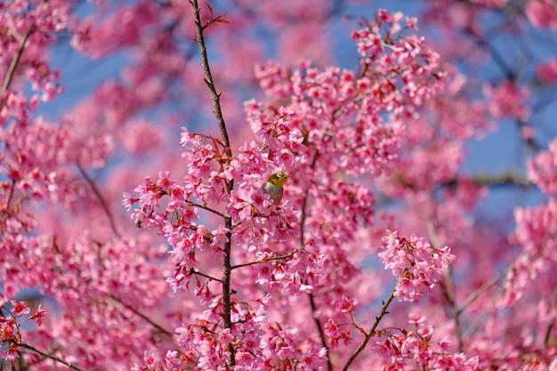 桜の木の枝に鳥 Premium写真
