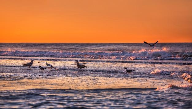 オーシャンフロントの鳥。ロックアウェイパークのエリアにあるニューヨーク近くの大西洋の海岸線 Premium写真