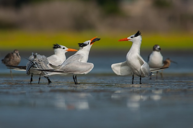 Птицы сидят на льду Бесплатные Фотографии