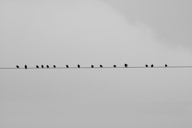 Uccelli seduti su un filo con uno sfondo grigio Foto Gratuite
