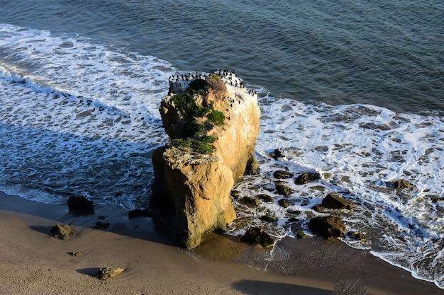 Птицы, стоящие на скале на берегу моря в прекрасный день Бесплатные Фотографии