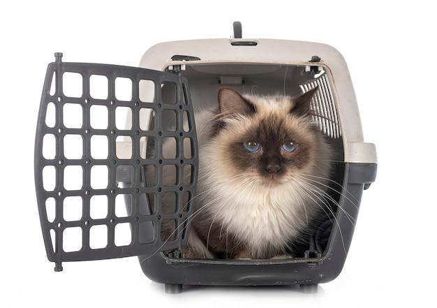 Бирманский кот и клетка Premium Фотографии