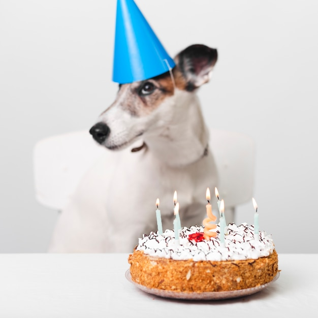 Incredible Birthday Dog With Cake And Candles Free Photo Personalised Birthday Cards Paralily Jamesorg