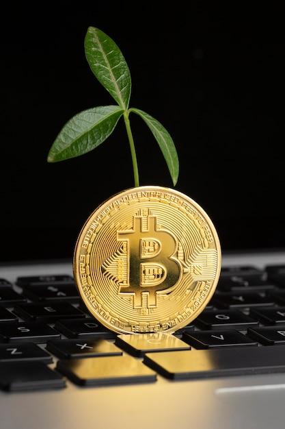 Биткойн поверх клавиатуры с растением Бесплатные Фотографии