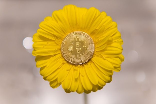 bitcoins images of flowers
