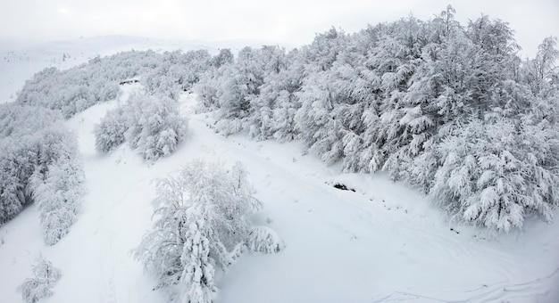 雪と白い霧の空を背景に冬の農場の葉のない森の木々の黒と白の背景。山の冬の風景 Premium写真