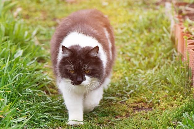 庭の黒と白の猫 無料写真