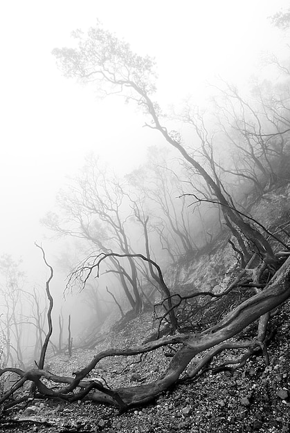 Black and white forest landscape Photo | Free Download