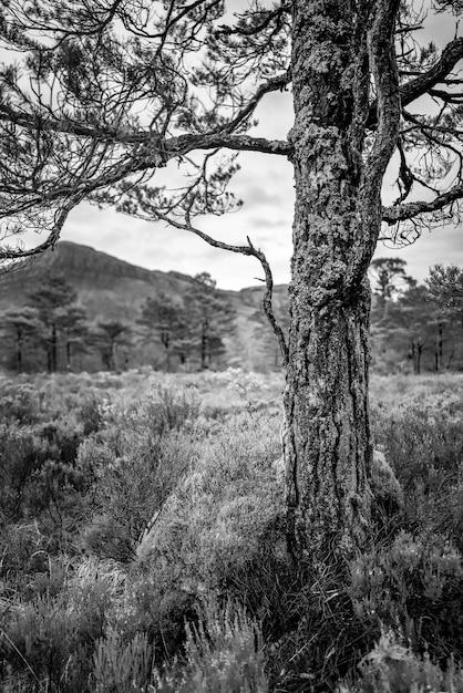 木の黒と白 無料写真