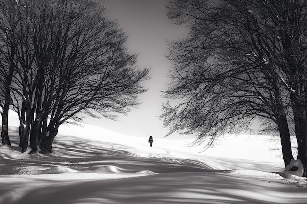 雪と2本の裸の木に立っている人の黒と白のショット 無料写真