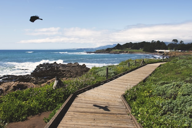 Black bird flying over the ocean near a wooden pathway during daytime Free Photo