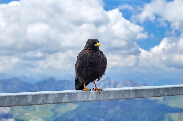 手すりの上に座って黄色のくちばしを持つ黒い鳥 Premium写真