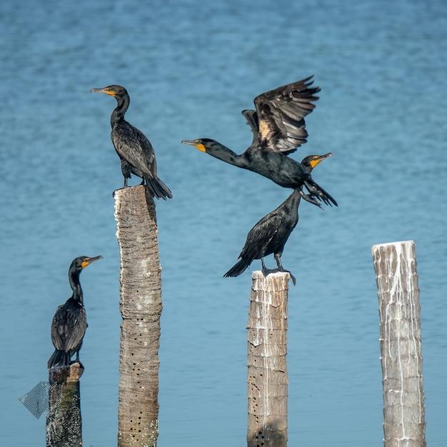 Uccelli neri in piedi su boschi tagliati messi in acqua durante il giorno Foto Gratuite