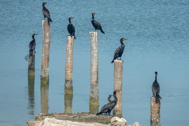切り立った森の上に立っている黒い鳥は、昼間に水に入れます 無料写真
