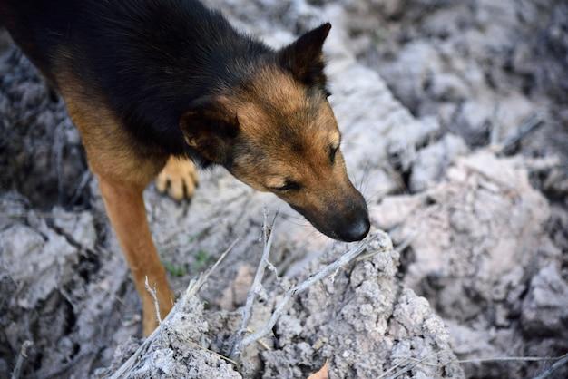 Black and brown dog looking Premium Photo