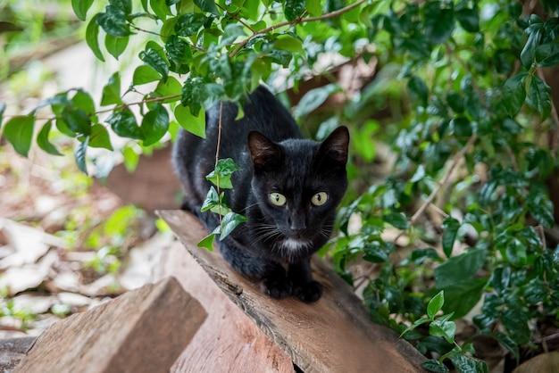 木の森の黒い猫 Premium写真